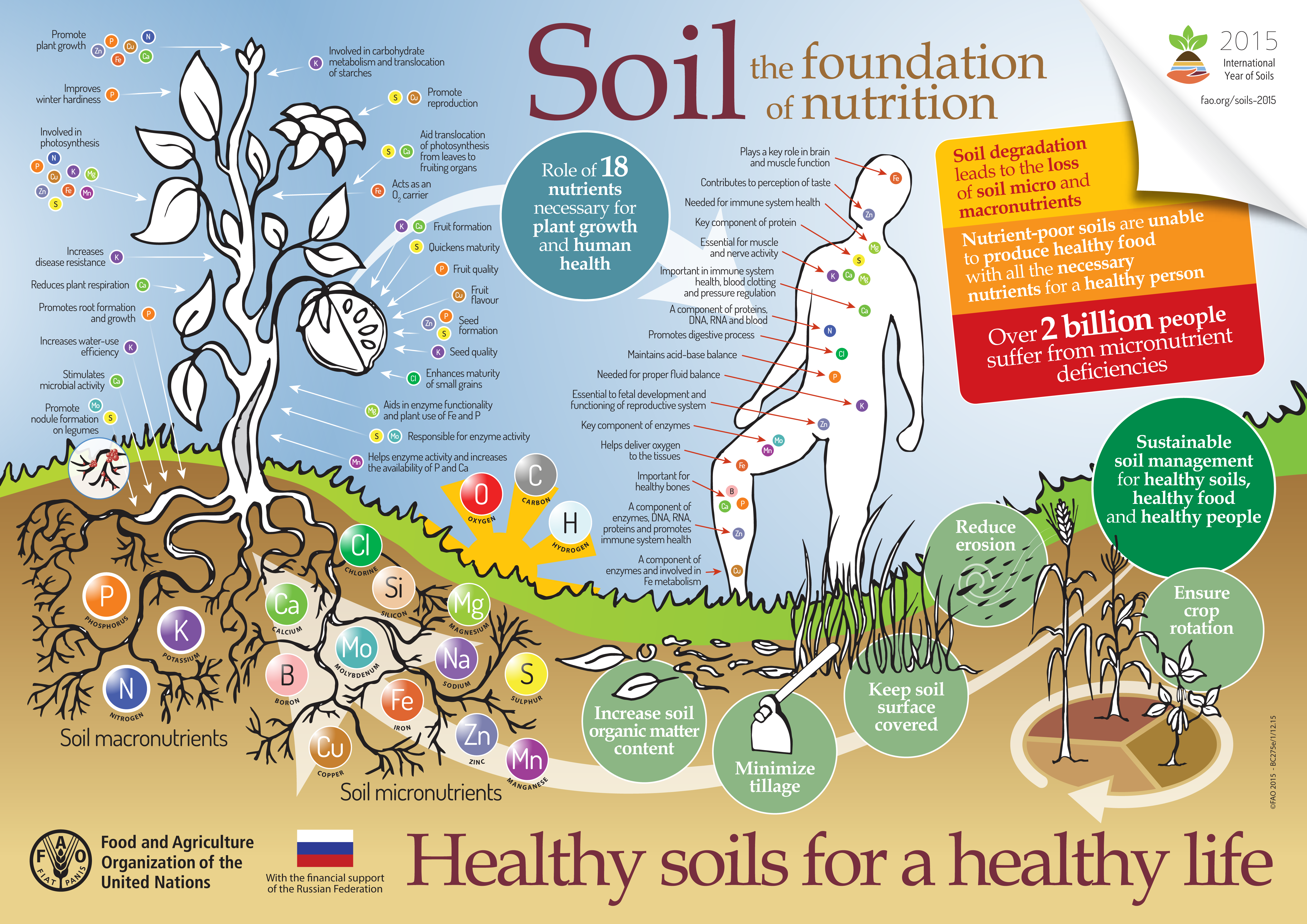 Soil microbes unseen but essential for Mineral soil vs organic soil
